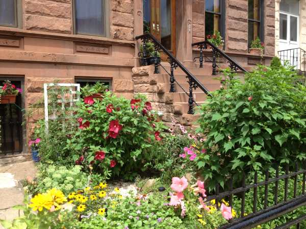 Bed-Stuy garden and stoop