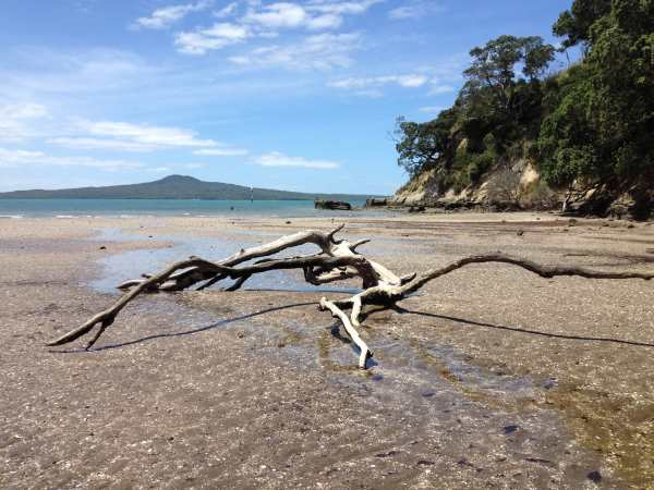 Driftwood St Heliers Bay