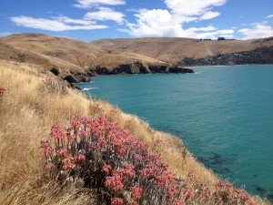 Godley Head - Awesome Coastal Walk, Christchurch, New Zealand