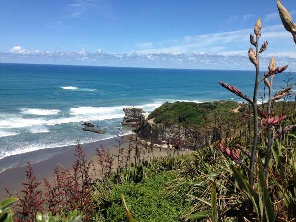 Muriwai gannet colony 1