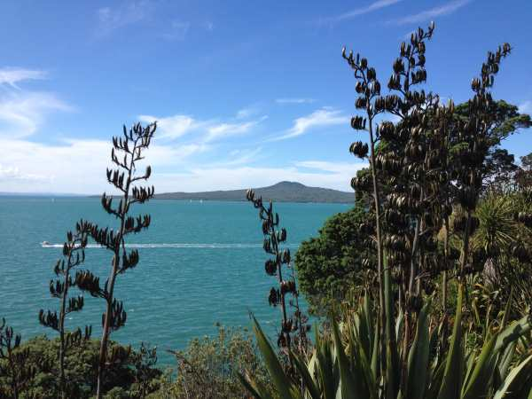 Native flax and Rangitoto Is