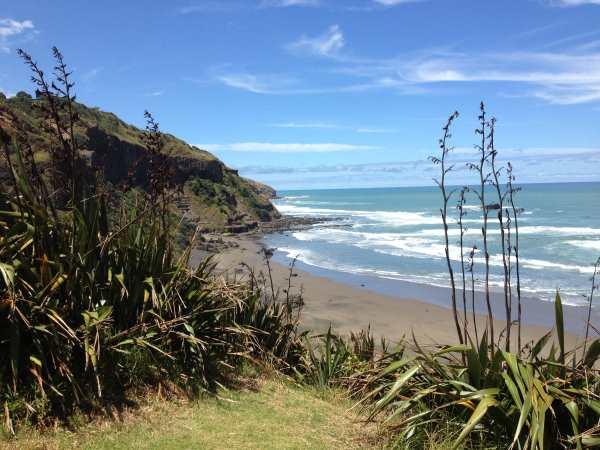 Short walk to gannet colony, Muriwai