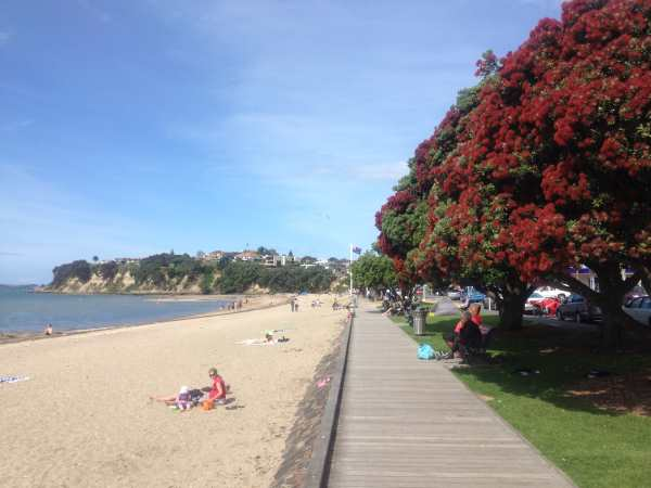 St Heliers Bay waterfront with Pohutukawa trees in foreground..jpg 2
