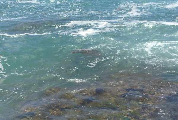 It looks like a rock but it's really a turtle!