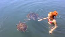 swimming sea turtles samoa