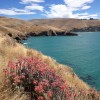 Godley Head – Awesome Coastal Walk, Christchurch, New Zealand